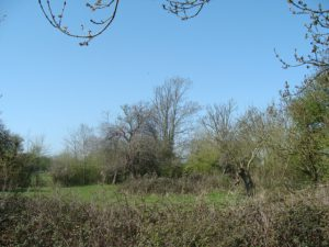 Photograph of an Orchard